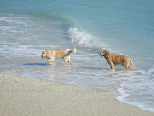 Walton Rocks Beach, a dog friendly beach on Hutchinson Island FL