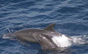 Florida Dolphin Watch Tours, Fort Pierce, Florida