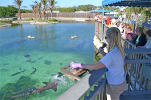 Florida Oceanographic Coastal Center. See sharks, sea turtles, feed stingrays, viewing aquariums and more!